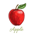 Fresh red apple fruit with leaf sketch vector image vector image