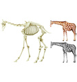 Giraffe and bone structure vector image vector image