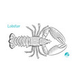 lobster hand-drawn vector image