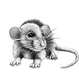 mouse hand-drawn graphic black and white sketch vector image