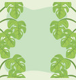 plants leaves monstera decoration green background vector image vector image