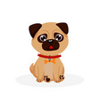 pug puppy isolated purebred pug dog puppy icon vector image