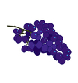 Purple burgundy and blue grape flat on white vector image vector image