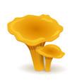 chanterelles mushrooms vegetable healthy food vector image