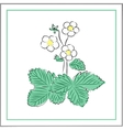 flowers and leaves of strawberry vector image