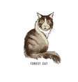 hand drawn forest cat vector image vector image