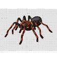wild spider on transparent background vector image vector image