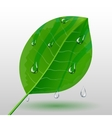 Green leave with water drops vector image
