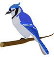 blue jay bird isolated on white background vector image vector image