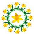 colored circular round spring mandala daffodil vector image vector image