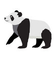 cute wild animal black and white panda bear icon vector image