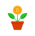 growth bit coin crypto potted plant vector image vector image