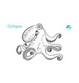 octopus hand-drawn vector image