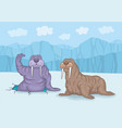 two walruses on ice vector image vector image