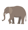 cartoon cute wild animal big gray elephant vector image