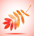 Orange watercolor painted rowan tree leaf vector image