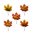 set of autumn maple laves in different autumnal vector image vector image