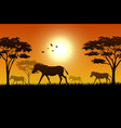 silhouette of horse at savanah vector image vector image