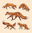 wild red fox set forest ginger animal flying