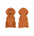 front and back view of sitting dachshund dog vector image vector image