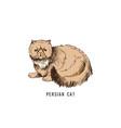 hand drawn persian cat vector image vector image