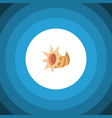 isolated cockleshell flat icon seashell vector image
