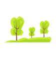 tall green trees on fresh grass neat park meadow vector image