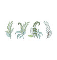 a set of graceful bouquets of different forest vector image