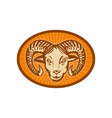 Bighorn sheep or ram vector image vector image
