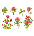 clover watercolor set beautiful spring floral vector image vector image