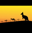 group of kangaroos in desert silhouette vector image