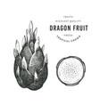 hand drawn sketch style dragon fruit organic vector image