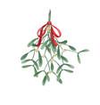 mistletoe watercolor bouquet vector image vector image
