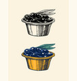 olives in a saucer organic vegetarian product vector image