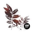 rowan leaf vector image vector image
