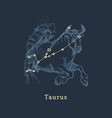 zodiac constellation taurus in engraving style vector image vector image