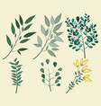 green leaves branch floral tree vector image
