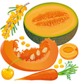 Carotene products set vector image vector image