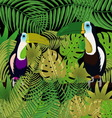Picture toucan in the jungle vector image vector image