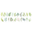 botanic elements trendy wild flowers and branches vector image vector image