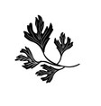 contour coriander herb to natural condiment of vector image vector image