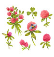 hand-drawn watercolor clover vector image vector image