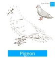 Pigeon bird learn to draw vector image vector image