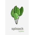 Spinach icon Vegetable green leaves vector image