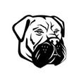bullmastiff dog head mascot black and white vector image vector image