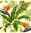 tropical exotic painting seamless background vector image vector image