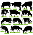 12 cows silhouettes set vector image vector image