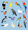 bird icon collection vector image vector image