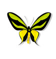 butterfly on white background with shadow vector image vector image