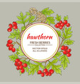 hawthorn frame vector image vector image